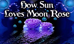 How Sun Loves Moon Rose
